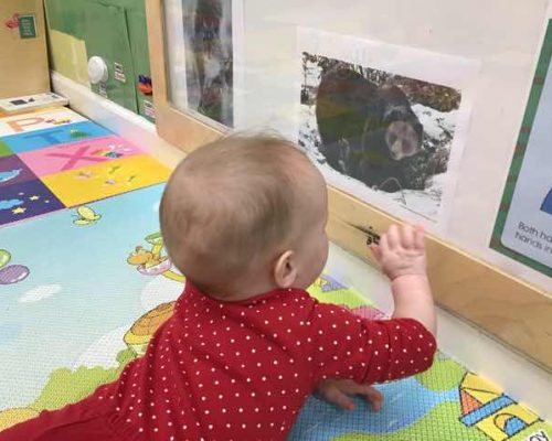 adorable baby crawling and looking at a picture of a bear on the wall at a Preschool & Daycare Serving Washington, DC